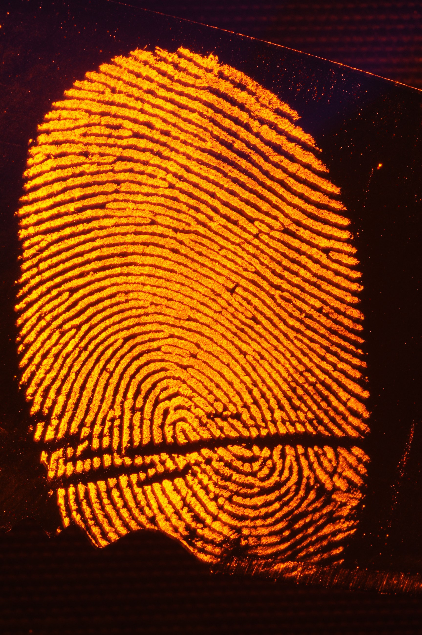 CSI-Fingerprint.jpg
