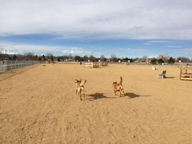 Dog Park at County Commons