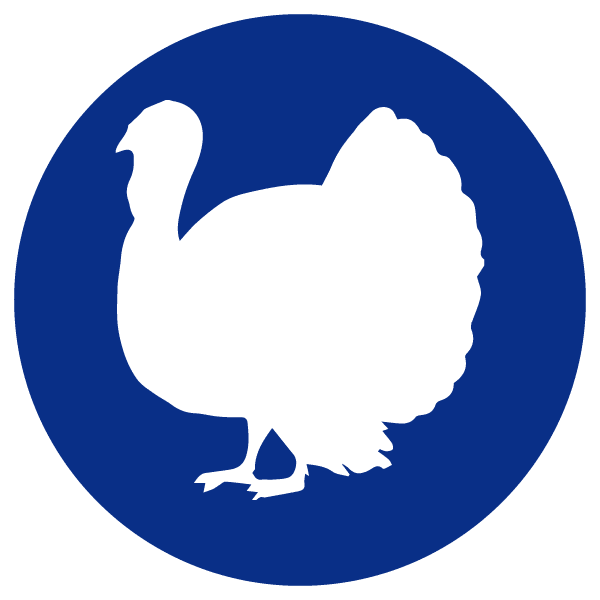 blue heading icons_turkey