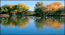 Pond at Metzger Farm